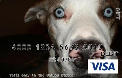 Dog Eyes Visa Gift Card
