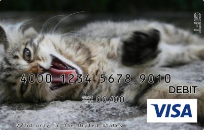 Yawning Cat Visa Gift Card