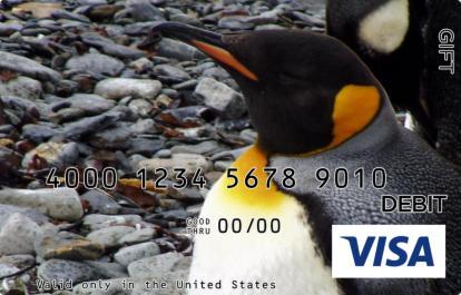 Chubby Penguin Visa Gift Card