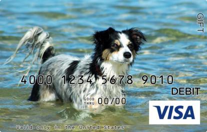 Water Dog Visa Gift Card