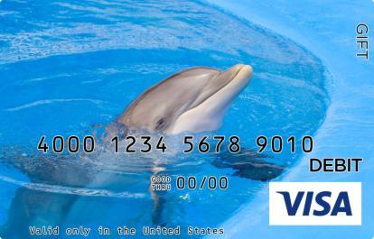 Dolphin Visa Gift Card