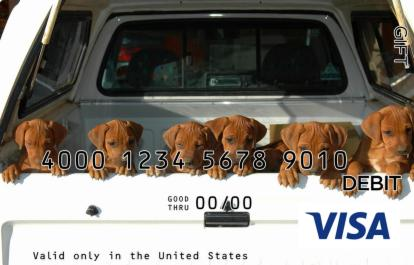 Puppies in Truck Visa Gift Card