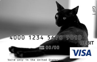 Wary Black Cat Visa Gift Card