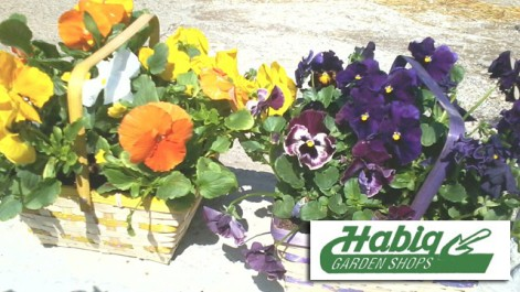 $20 of Plants, Flowers, Gardening Items and Gifts at Habig Garden ...