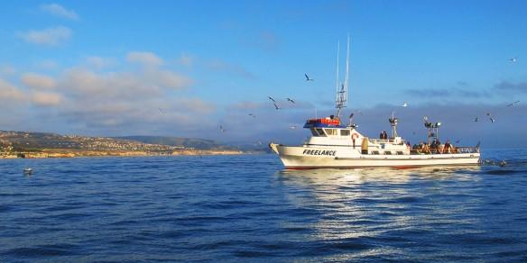 Get my perks 20 up deep sea fishing off catalina for Deep sea fishing san diego california