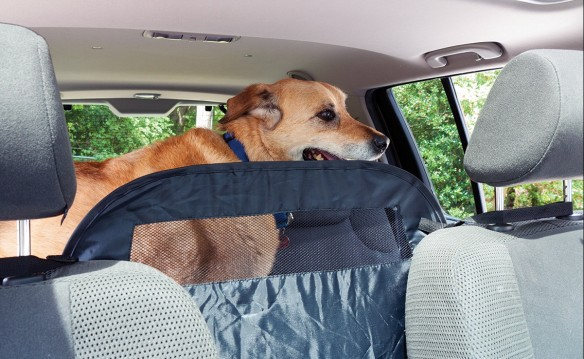 NATIONAL BLOG - NETWORK - Car Barrier for Dogs