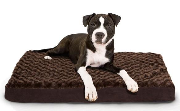 NATIONAL - NETWORK - Deluxe Orthopedic or Memory Foam Pet Bed