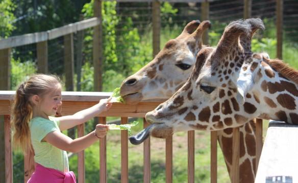$9 to the Elmwood Park Zoo