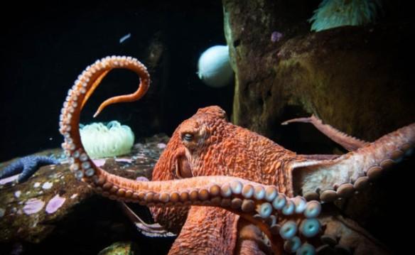 Oregon Coast Aquarium Admission Fall 2017