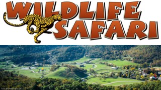 2 for 1 Drive-Thru Admission to Wildlife Safari