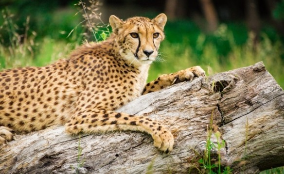Wildlife Safari - 2 Adult or 2 Children Admissions 2018